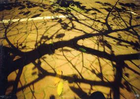 Tree Shadows VI